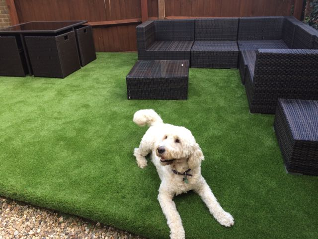 Synthetic Grass Business - Premium Artificial Grass